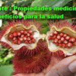 Achiote y sus propiedades medicinales