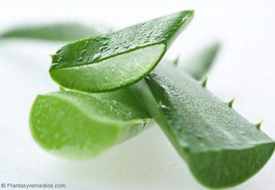 Aloe-Vera para curar la dermatitis seborreica