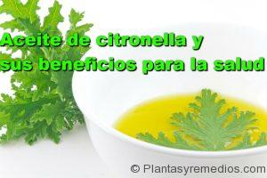 propiedades y beneficios del aceite de citronela