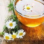 té de manzanilla para quitar la gripe