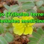 Abrojo (Tribulus terrestris): Propiedades medicinales