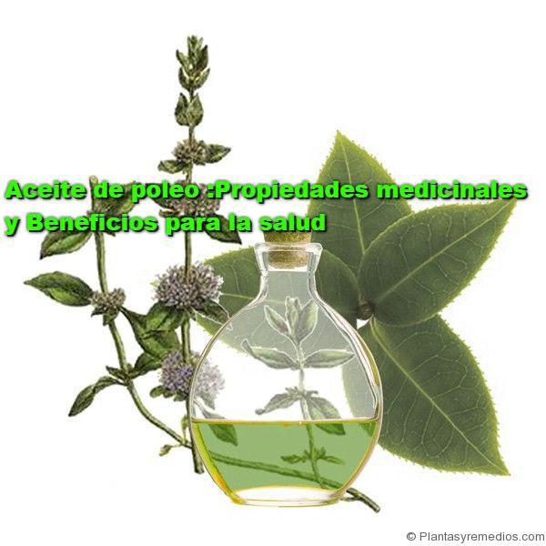 Aceite de poleo y sus propiedades medicinales plantas for Planta decorativa propiedades medicinales