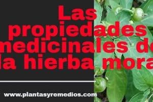 hierba mora propiedades medicinales