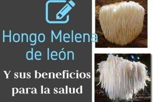 usos y beneficios de la melen de leon