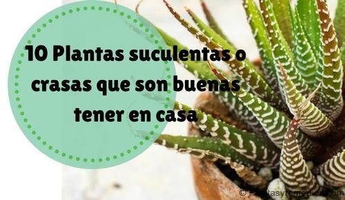 10 plantas suculentas o crasas que puede tener en casa - Tipos de plantas y sus cuidados ...