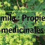 Alquemila : Propiedades medicinales