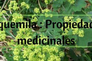 Alquemila Propiedades medicinales