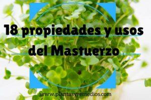 Mastuerzo - usos - propiedades medicinales
