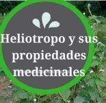 Heliotropo y sus propiedades medicinales