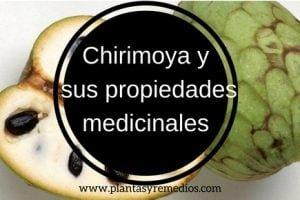 chirimoya propiedades - usos medicinales
