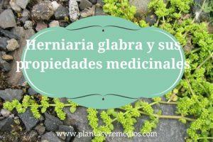 hierba Herniaria glabra - usos - propiedades medicinales