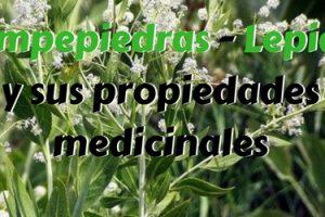 Rompepiedras - Lepidio y sus propiedades medicinales