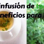 Infusión de tomillo : usos y beneficios para la salud