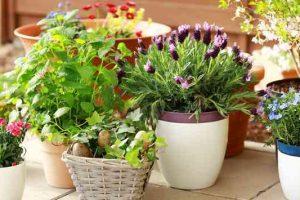 plantas para curar el estrés