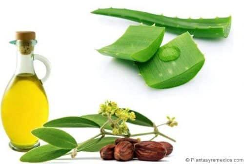 Gel de aloe vera y aceite de oliva