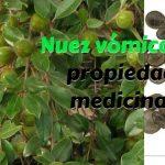Nuez vómica: Usos, beneficios, dosis y efectos secundarios