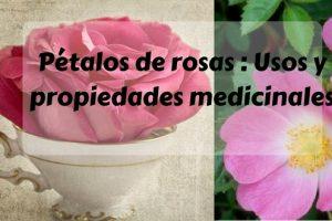 Pétalos de rosas - Usos y propiedades medicinales