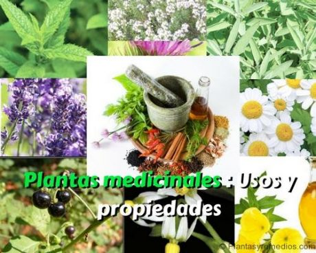 Plantas medicinales - Usos y propiedades (2)