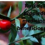Rusco (Ruscus aculeatus) , propiedades y beneficios para la salud