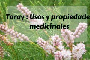 Taray - Usos y propiedades medicinales
