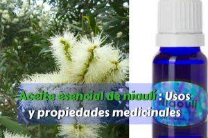 Aceite esencial de niaulí - Usos y propiedades medicinales