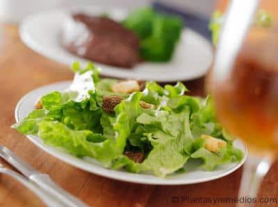 verduras de hoja verde