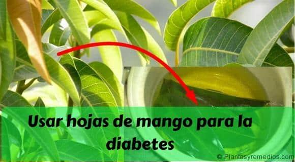 Resultado de imagen para Beneficios de la hoja de mango para la diabetes