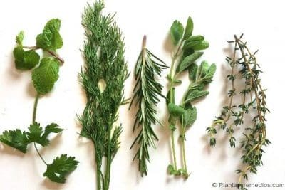 plantas carminativas