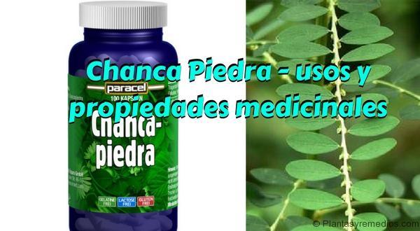 Chanca Piedra - usos y propiedades medicinales