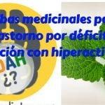 Hierbas para el Trastorno por déficit de atención con hiperactividad