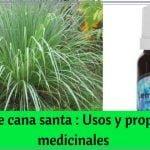Aceite de cana santa : Usos y propiedades medicinales