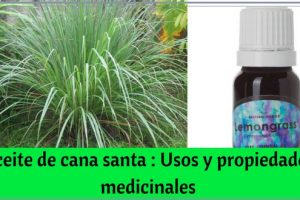 Aceite de cana santa - Usos y propiedades medicinales
