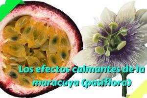 Los efectos calmantes de la maracuya (pasiflora)