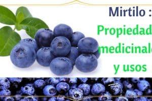 Mirtilo - Propiedades medicinales y usos