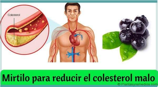 Mirtilo para reducir el colesterol malo